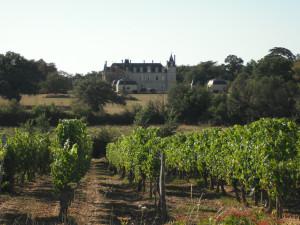 vines #2