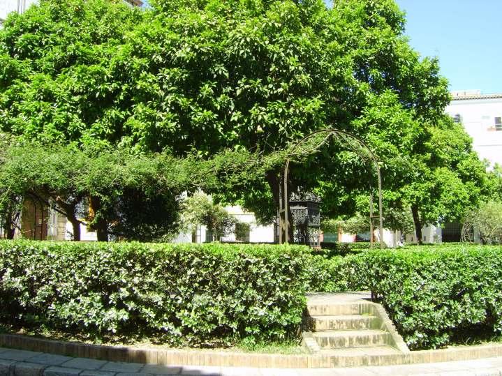 Seville 426