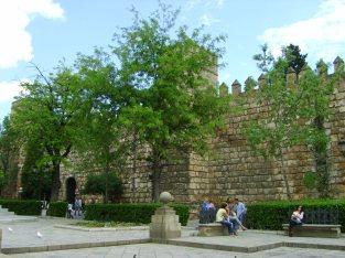 Seville 531